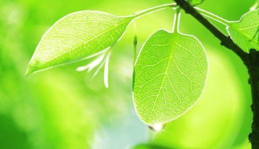 「心を浄める」が仏教の軸